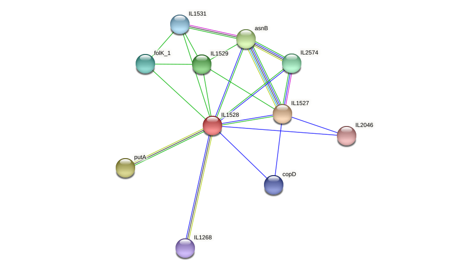 IL1528 protein (Idiomarina loihiensis) - STRING interaction network