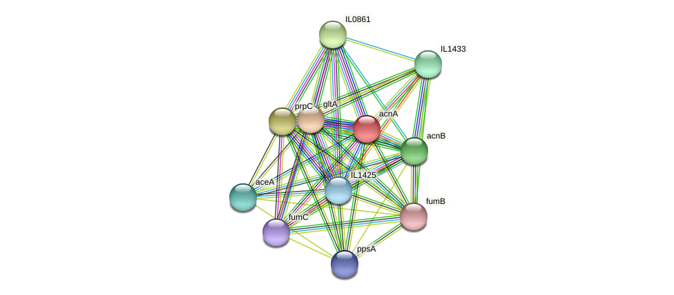 acnA protein (Idiomarina loihiensis) - STRING interaction network