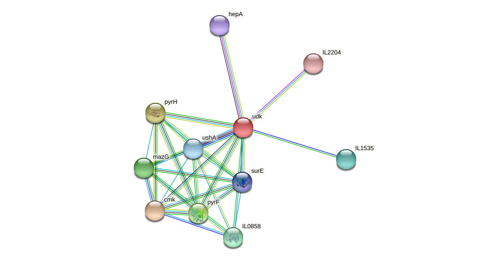 udk protein (Idiomarina loihiensis) - STRING interaction network