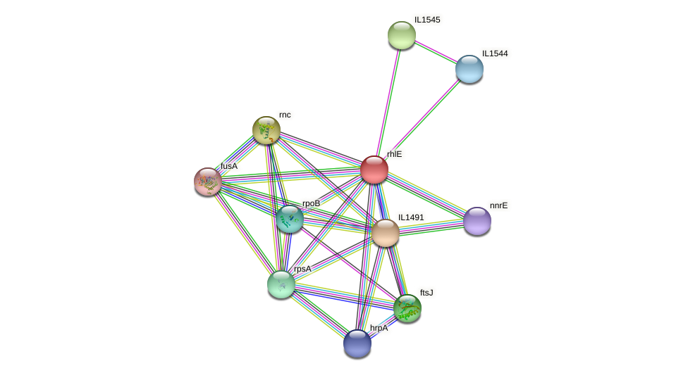 rhlE protein (Idiomarina loihiensis) - STRING interaction network