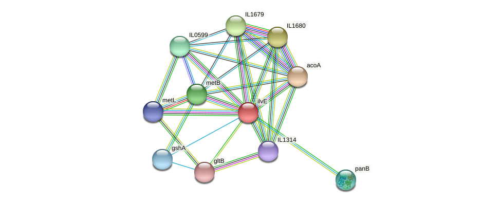 ilvE protein (Idiomarina loihiensis) - STRING interaction network