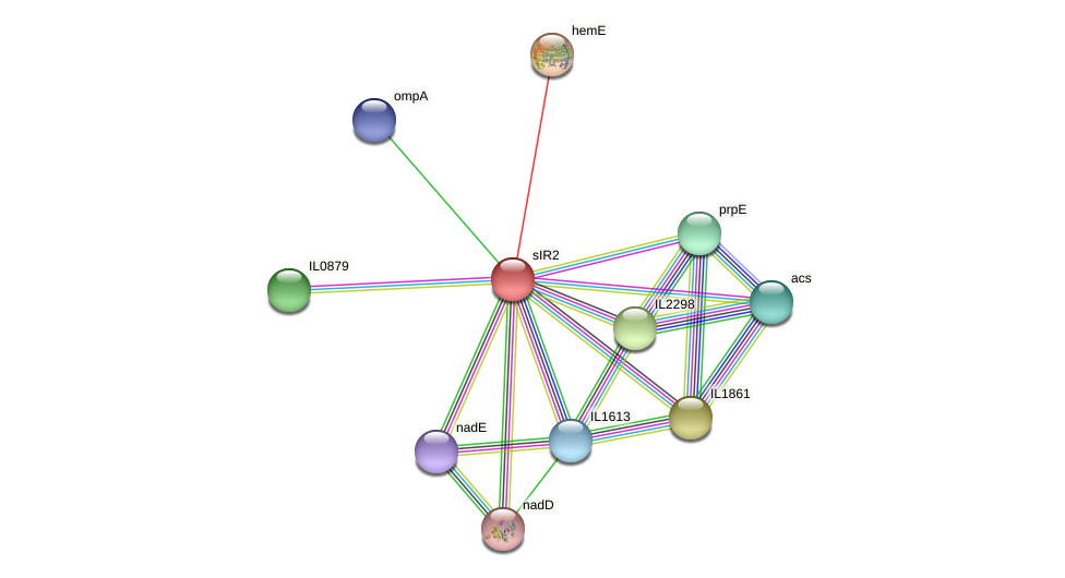 sIR2 protein (Idiomarina loihiensis) - STRING interaction network
