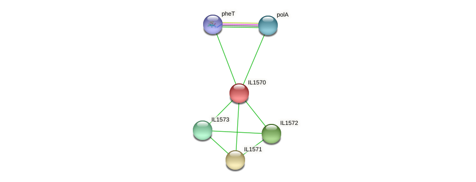 IL1570 protein (Idiomarina loihiensis) - STRING interaction network