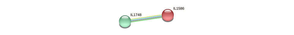 IL1586 protein (Idiomarina loihiensis) - STRING interaction network