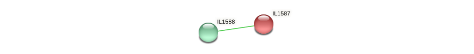 IL1587 protein (Idiomarina loihiensis) - STRING interaction network