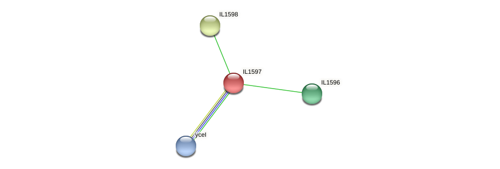 IL1597 protein (Idiomarina loihiensis) - STRING interaction network