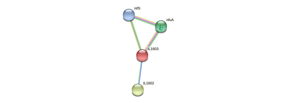 IL1603 protein (Idiomarina loihiensis) - STRING interaction network