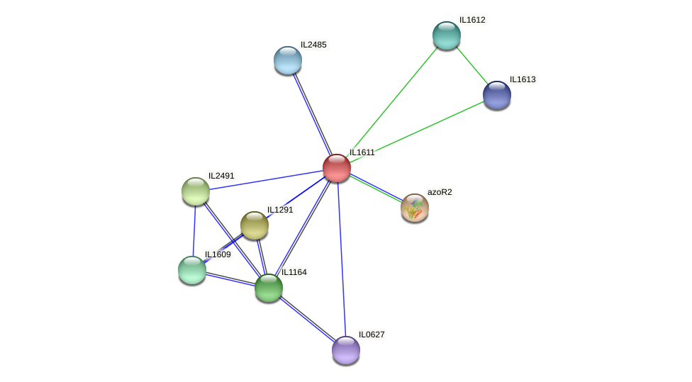 IL1611 protein (Idiomarina loihiensis) - STRING interaction network
