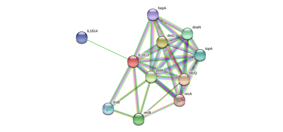 IL1613 protein (Idiomarina loihiensis) - STRING interaction network