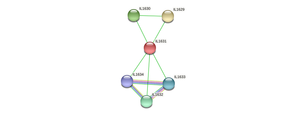 IL1631 protein (Idiomarina loihiensis) - STRING interaction network