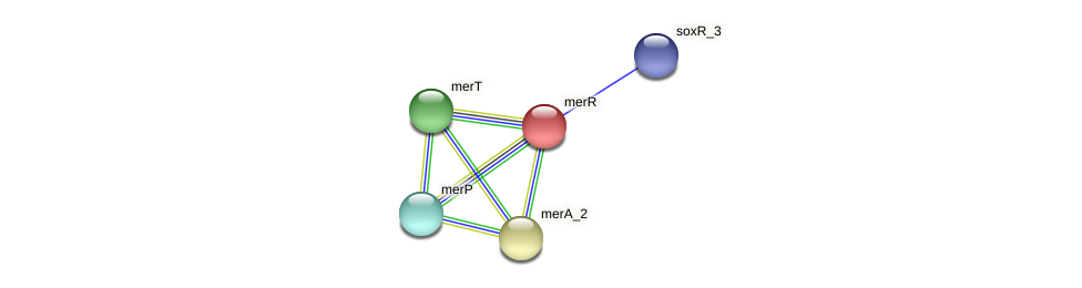 merR protein (Idiomarina loihiensis) - STRING interaction network