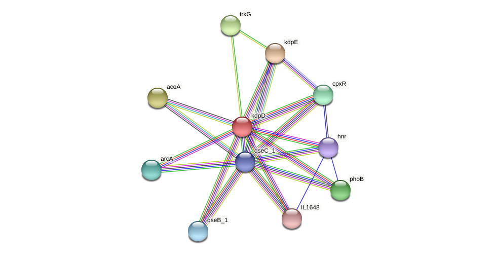 kdpD protein (Idiomarina loihiensis) - STRING interaction network