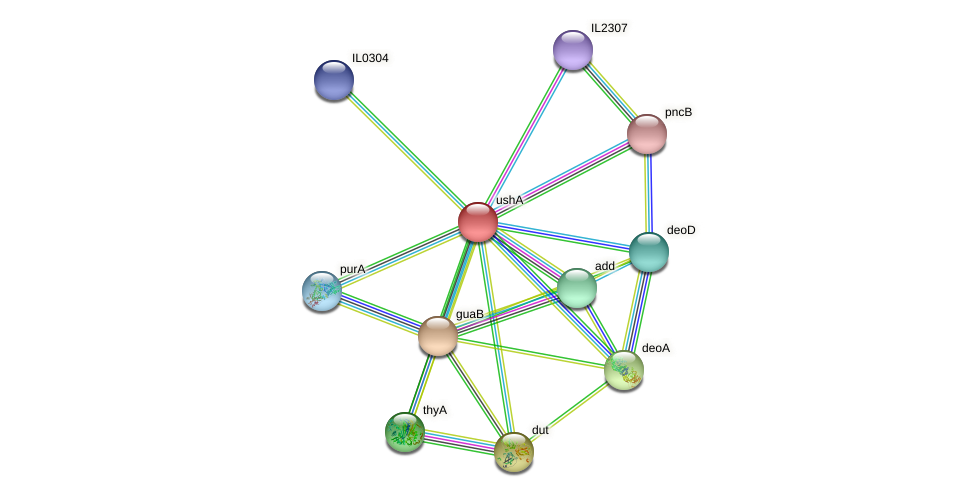 ushA protein (Idiomarina loihiensis) - STRING interaction network