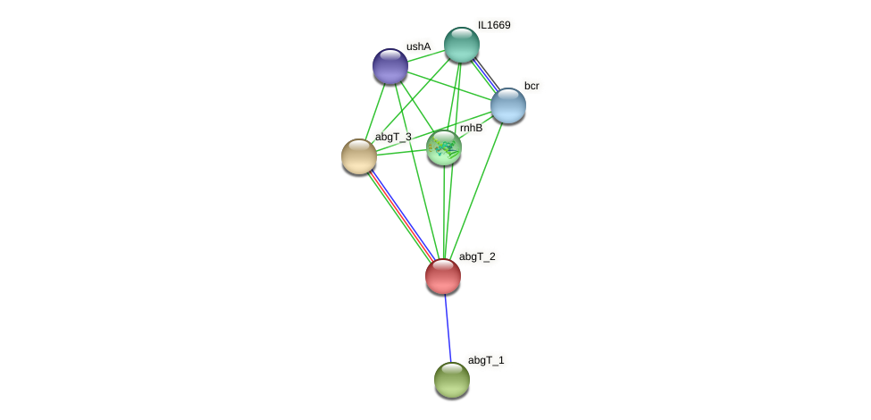 IL1671 protein (Idiomarina loihiensis) - STRING interaction network