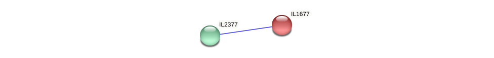 IL1677 protein (Idiomarina loihiensis) - STRING interaction network