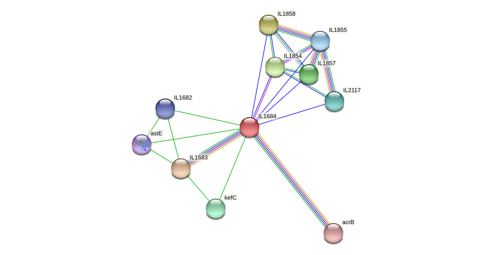 IL1684 protein (Idiomarina loihiensis) - STRING interaction network