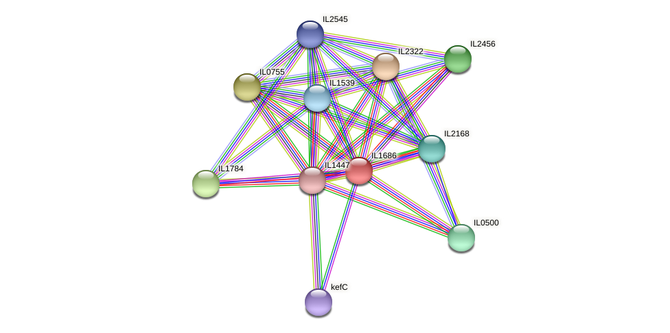 IL1686 protein (Idiomarina loihiensis) - STRING interaction network