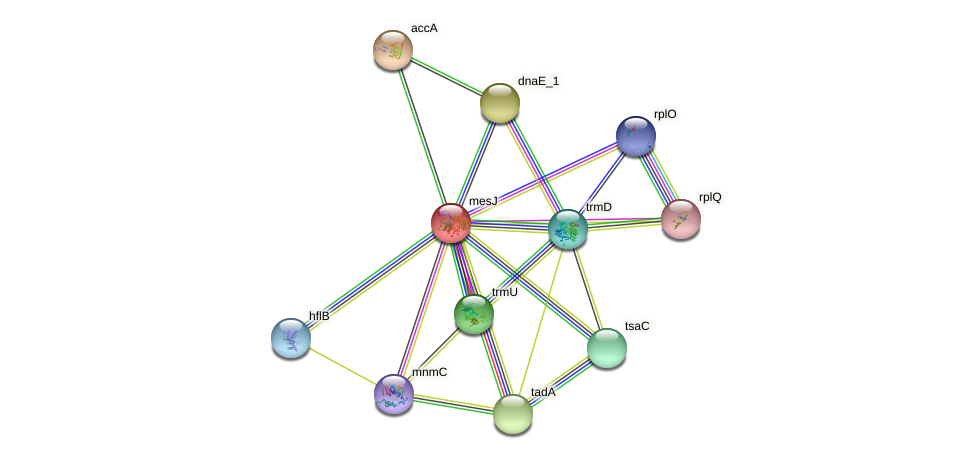tilS protein (Idiomarina loihiensis) - STRING interaction network