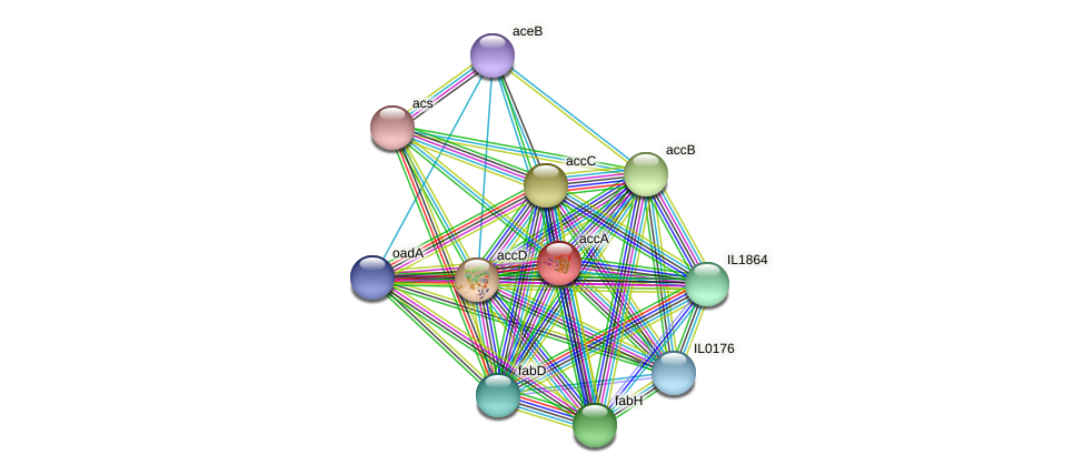 accA protein (Idiomarina loihiensis) - STRING interaction network