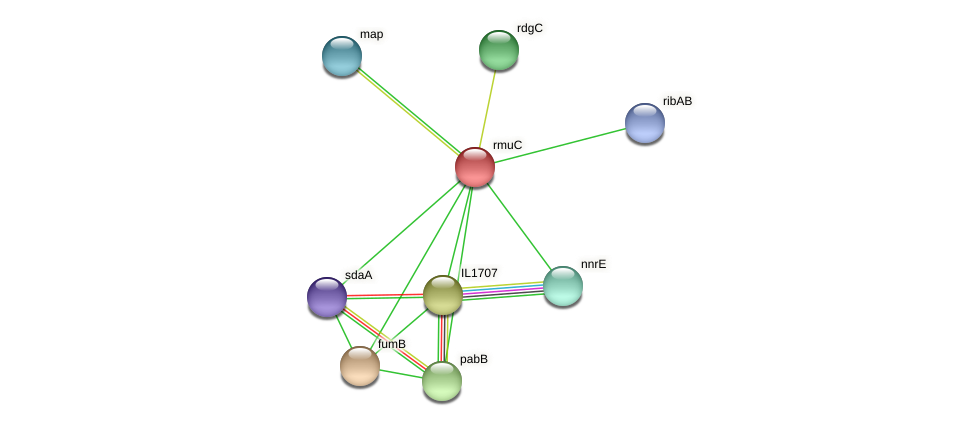 rmuC protein (Idiomarina loihiensis) - STRING interaction network