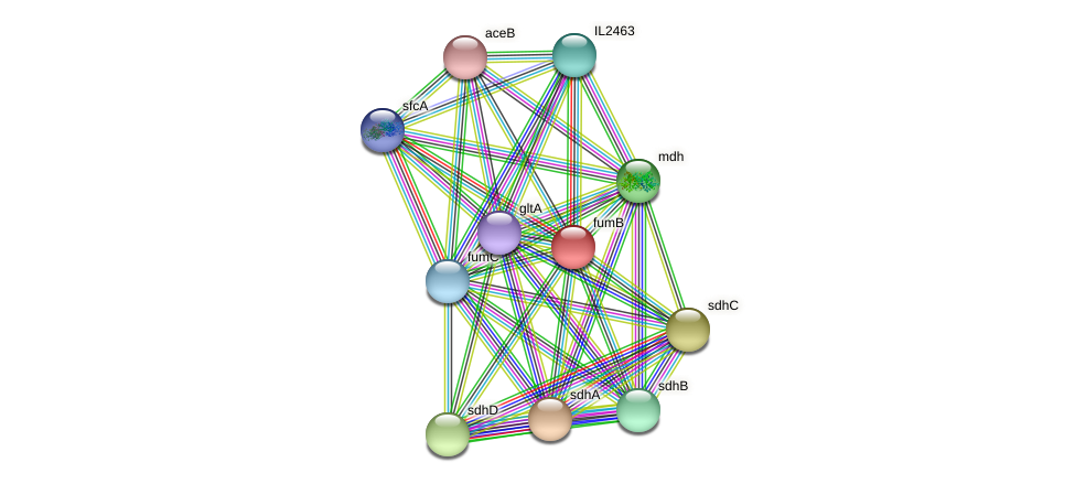 fumB protein (Idiomarina loihiensis) - STRING interaction network