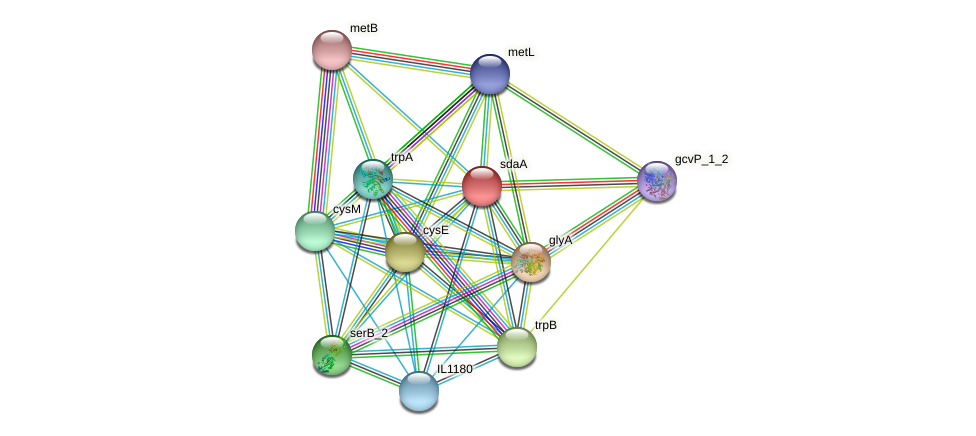 sdaA protein (Idiomarina loihiensis) - STRING interaction network
