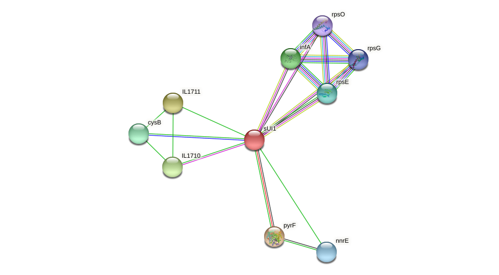 sUI1 protein (Idiomarina loihiensis) - STRING interaction network
