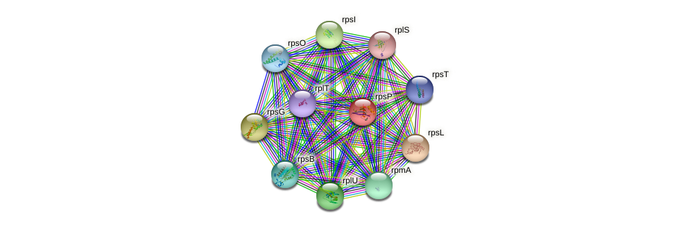 rpsP protein (Idiomarina loihiensis) - STRING interaction network