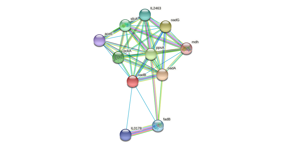 oadB protein (Idiomarina loihiensis) - STRING interaction network