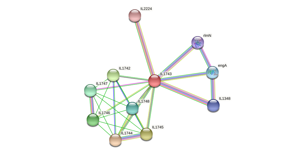 IL1743 protein (Idiomarina loihiensis) - STRING interaction network