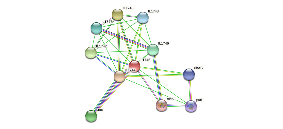 IL1745 protein (Idiomarina loihiensis) - STRING interaction network