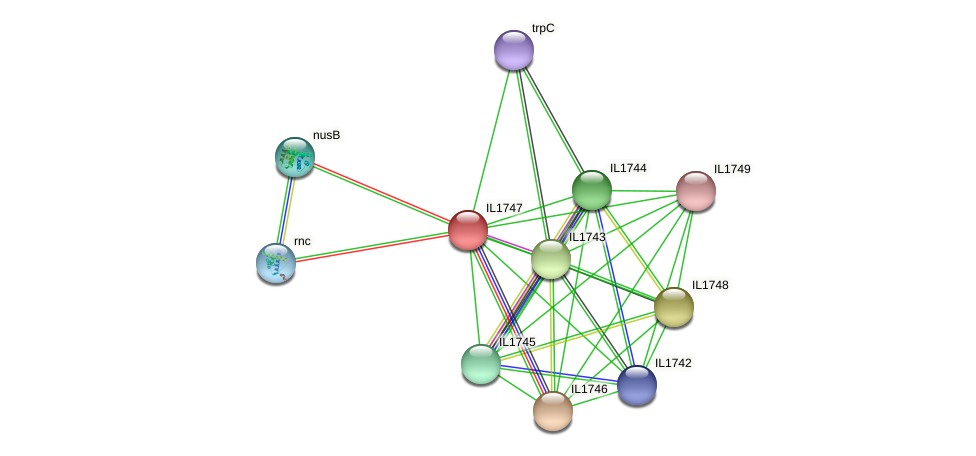 IL1747 protein (Idiomarina loihiensis) - STRING interaction network