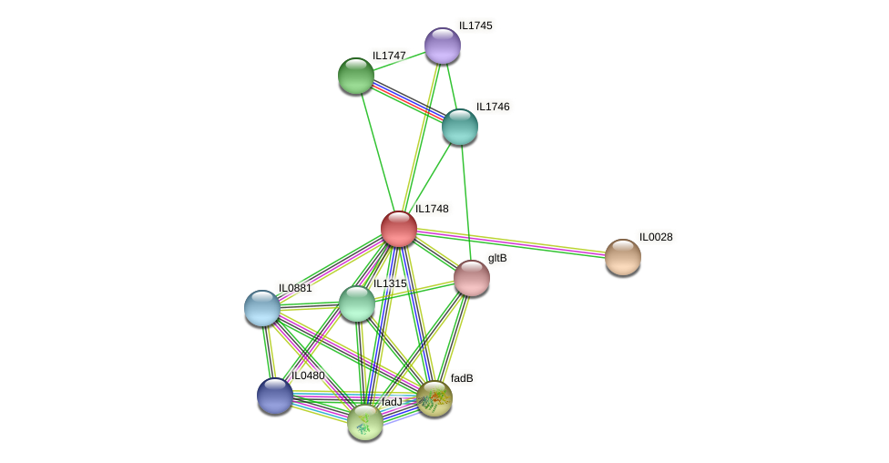 IL1748 protein (Idiomarina loihiensis) - STRING interaction network