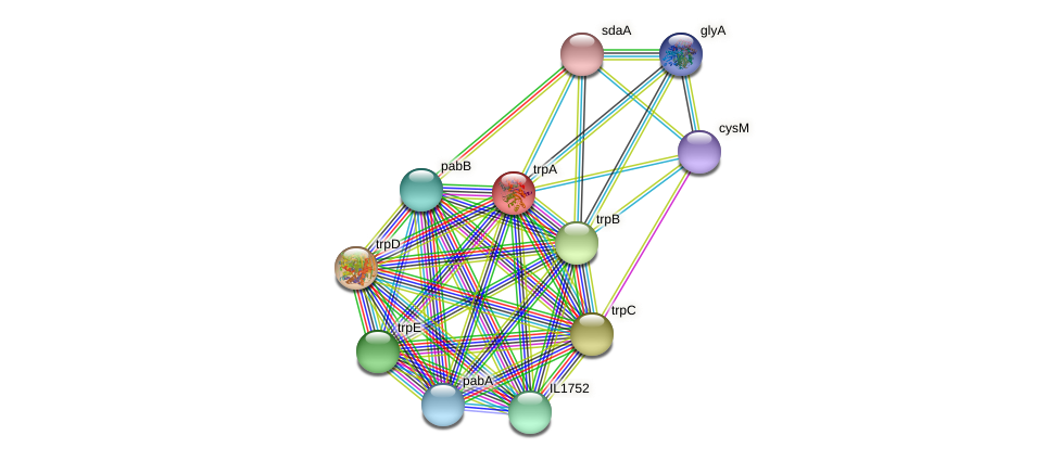 trpA protein (Idiomarina loihiensis) - STRING interaction network