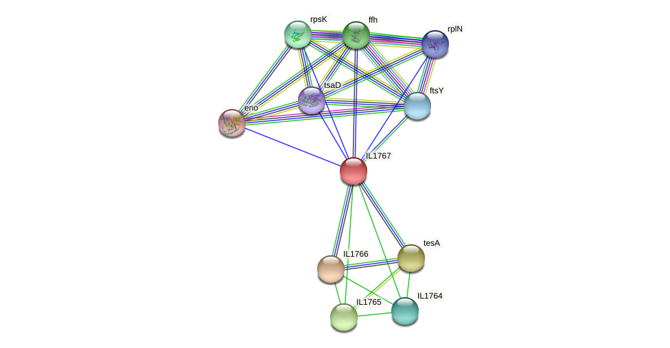 IL1767 protein (Idiomarina loihiensis) - STRING interaction network