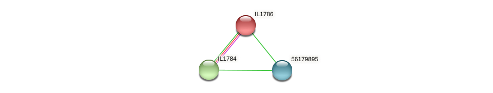 IL1786 protein (Idiomarina loihiensis) - STRING interaction network