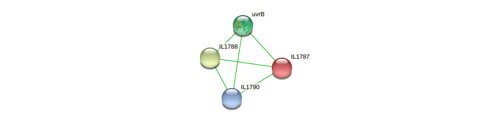IL1787 protein (Idiomarina loihiensis) - STRING interaction network