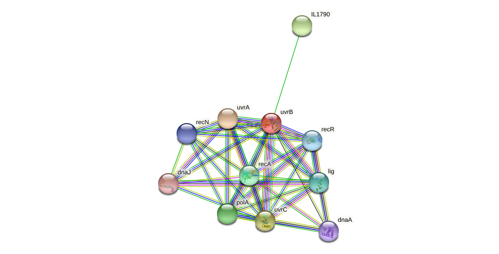 uvrB protein (Idiomarina loihiensis) - STRING interaction network