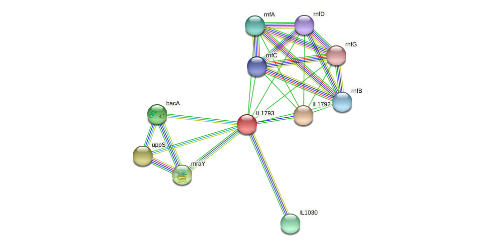IL1793 protein (Idiomarina loihiensis) - STRING interaction network