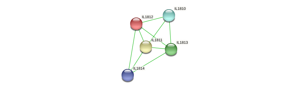 IL1812 protein (Idiomarina loihiensis) - STRING interaction network