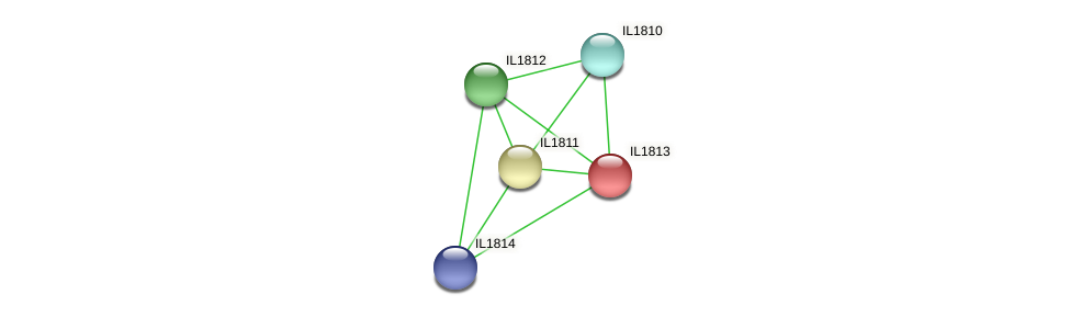 IL1813 protein (Idiomarina loihiensis) - STRING interaction network