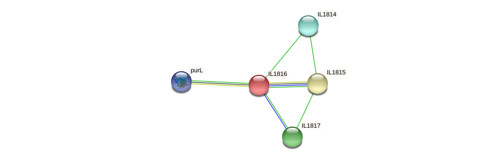 IL1816 protein (Idiomarina loihiensis) - STRING interaction network