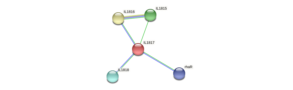 IL1817 protein (Idiomarina loihiensis) - STRING interaction network
