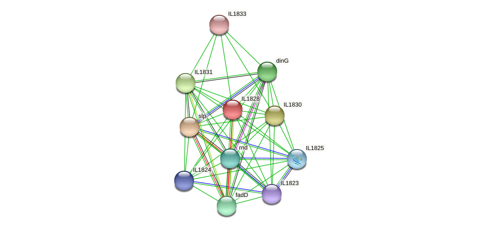 IL1828 protein (Idiomarina loihiensis) - STRING interaction network
