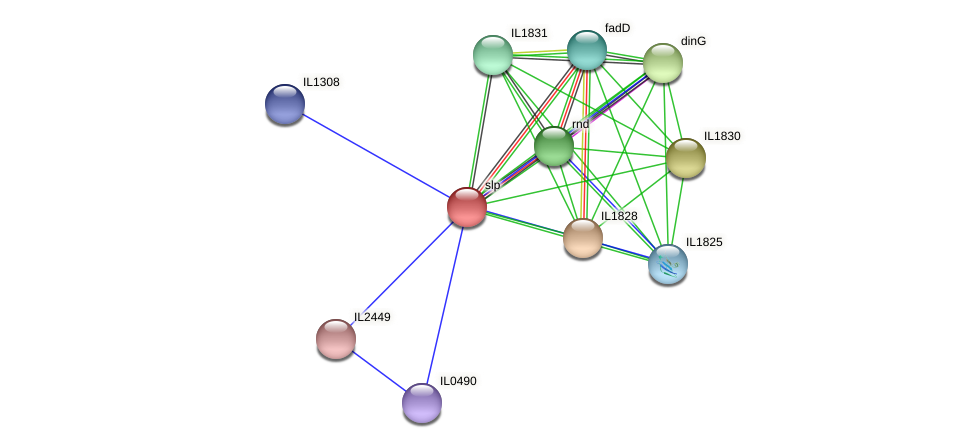 slp protein (Idiomarina loihiensis) - STRING interaction network