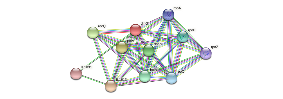 dinG protein (Idiomarina loihiensis) - STRING interaction network