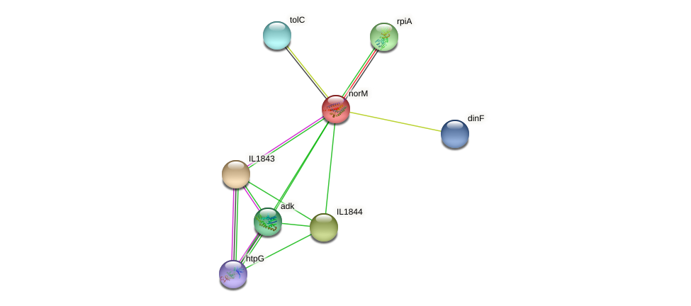 norM protein (Idiomarina loihiensis) - STRING interaction network