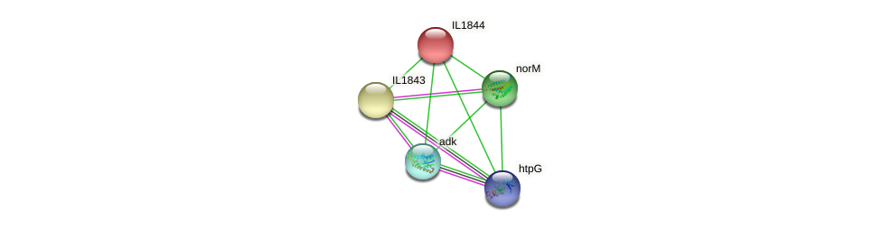 IL1844 protein (Idiomarina loihiensis) - STRING interaction network