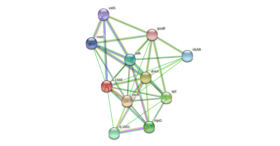 IL1848 protein (Idiomarina loihiensis) - STRING interaction network