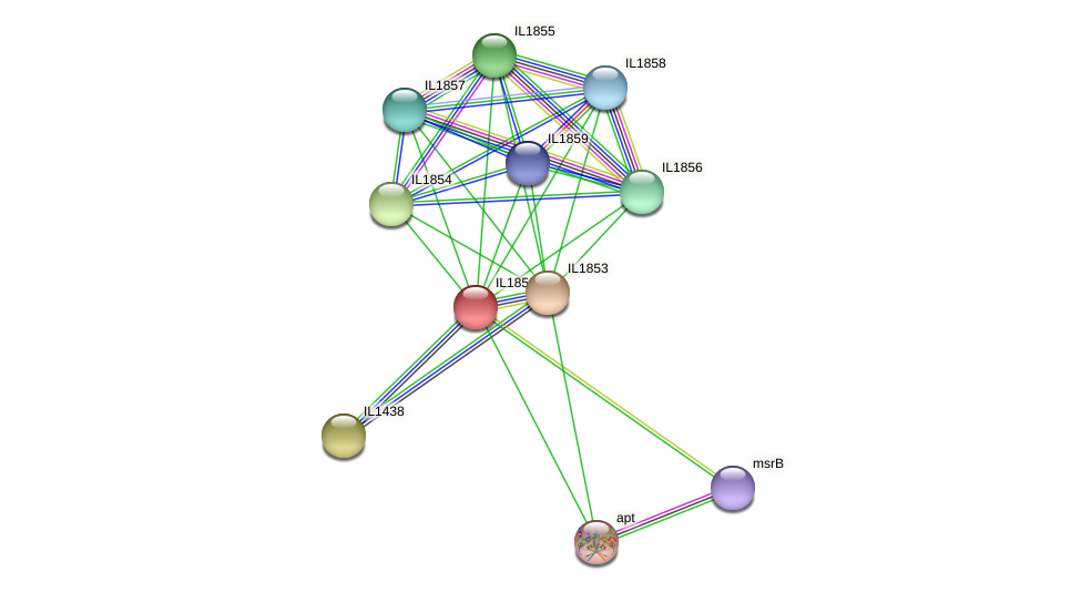 IL1852 protein (Idiomarina loihiensis) - STRING interaction network